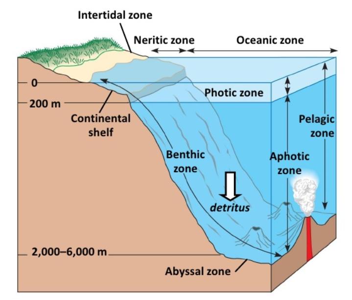 Horizontal zonation ocean stratification benthic for Ocean floor zones diagram